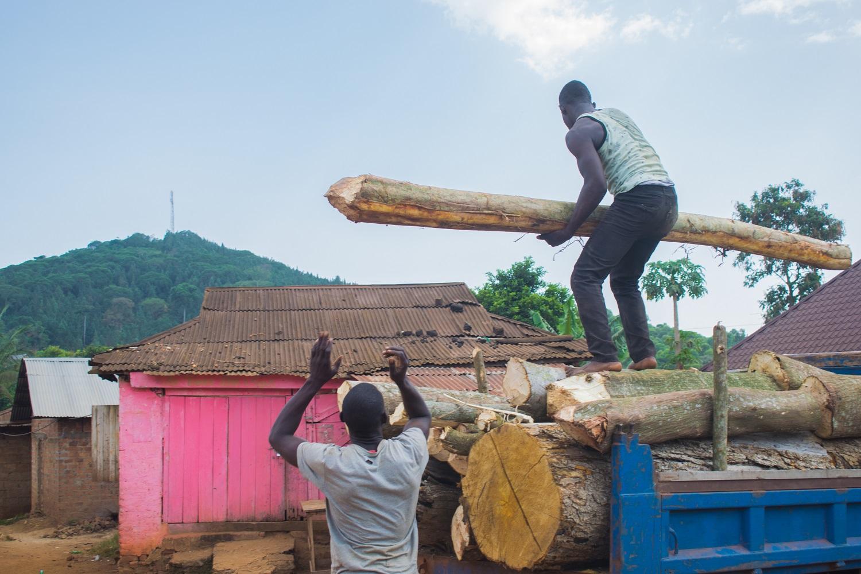 Mabira Firewood