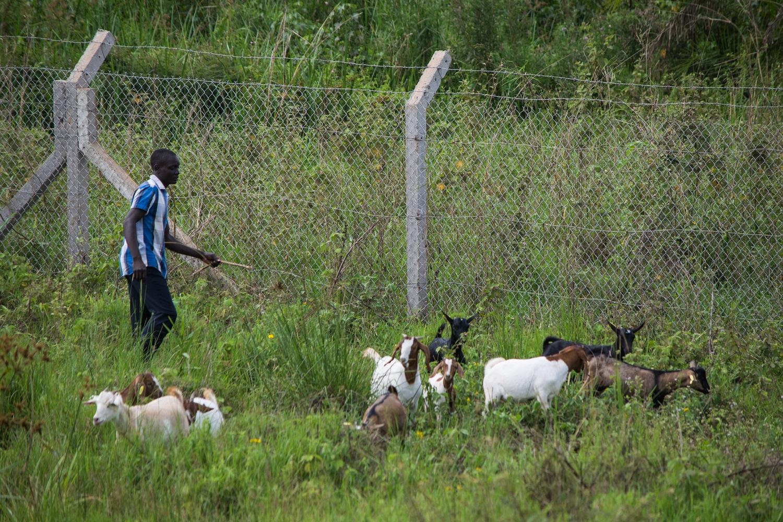 Kathy's Centre: Goat Farm